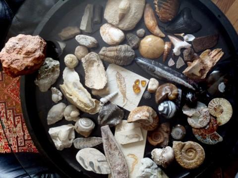 Fossilien, Erde, Welt, Urzeit, Steine, Geschichte