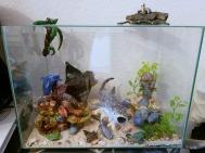 Riff, Korallen, Meer, Weltmeere, Sand, Walhai, Manta, Manatee,  Delfin, Weißspitzenriffhai, Karettschildkröte, Tümmler, Blaupunktstechrochen, Riesenmuräne, Hummer, Palettendoktorfisch, Maskenfalterfische, Igelfisch, Seestern, Oktopus, Anemonenfisch, Mörde
