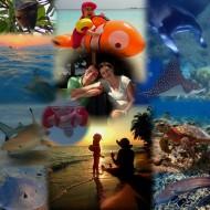 Vilamendhoo, Maldives, Paradise, Indian Ocean, Manta, Whaleshark