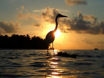 Vilamendhoo, Malediven, Sunrise