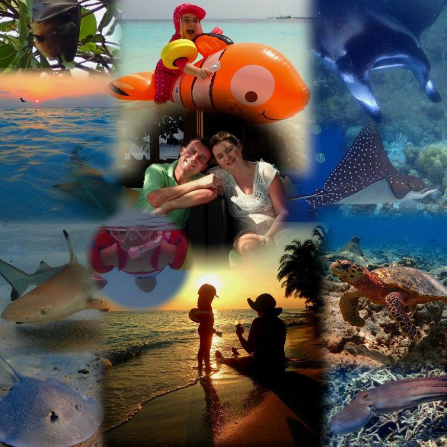 Malediven, Vilamendhoo, Schnorcheln, Paradies, Manta, Walhai